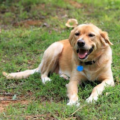 Vakantiehuisje met hond
